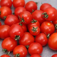 illustration ingrédient Tomate