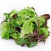 illustration Mesclun